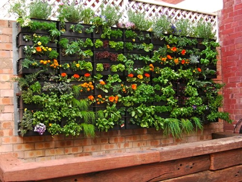 Vertical Garden Meets Aquaponics