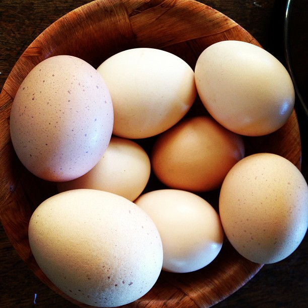 Egg count: currnetly one per hen per day. And they said heritage breeds don't lay!