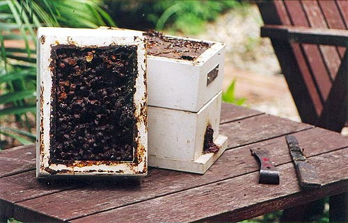 Sugarbag hive with sugarbag layer on left and brood box on the right